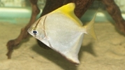 brackish_fish.jpg