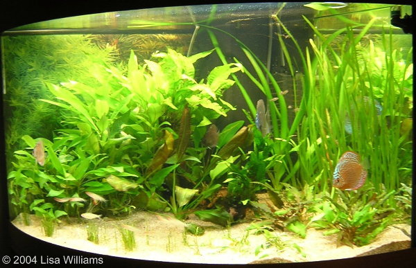 Tropical fish uk tropical fish 2017 fish tank maintenance for Exotic fish tanks